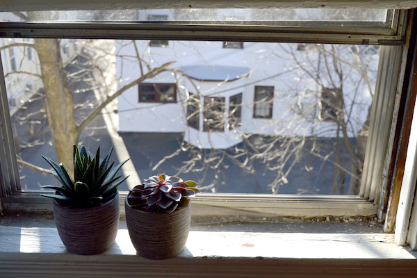 potted plants in window frame overlooking white house and tree