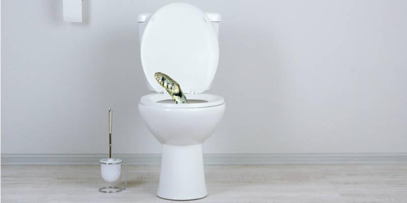 "a ""toilet snake"""