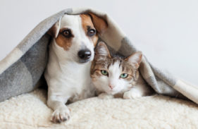 5 Tips for Pet-Proofing Your Plumbing