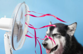 5 Ways to Keep Your Pets Safe from Electrical Hazards