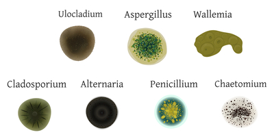 Diagram of different types of mold.